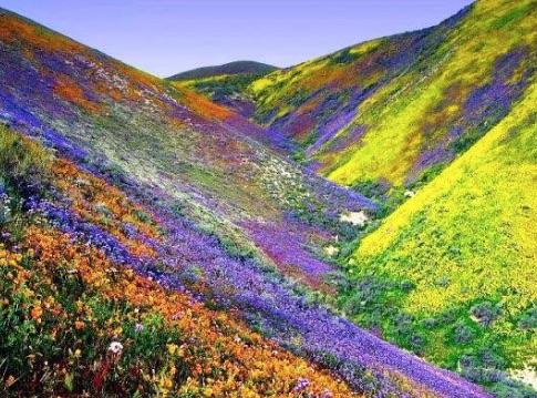 aracama-flowers-02