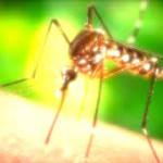 mosquito-2016