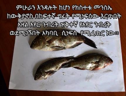 ethiopia-fallen-fish