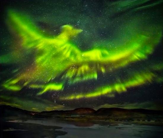 phoenix-aurora