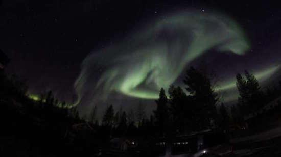 wolf-aurora-sweden