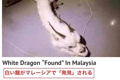 white-dragon-5