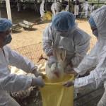taiwan-birds-flu