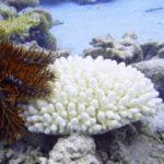 coral-bleach-s3