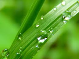 water-green-0801