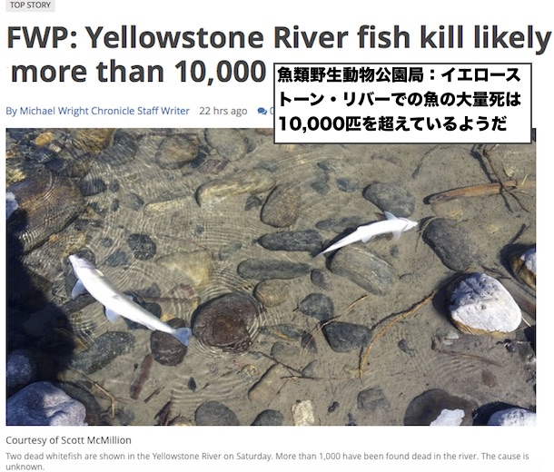 yellowstone-fish-die