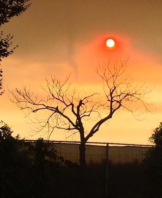 california-sun-02