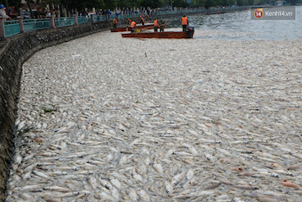 vietnam-fish-deaths