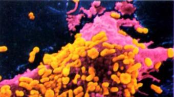 mcr-1-antibuotics