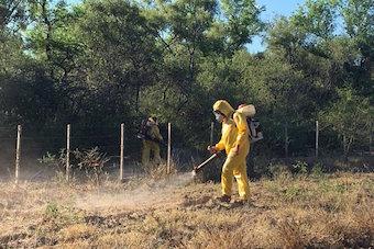 ARGENTINA-locusts-plague