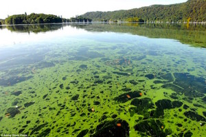 algae-bloom-bmaa