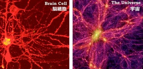 brain-univers-top