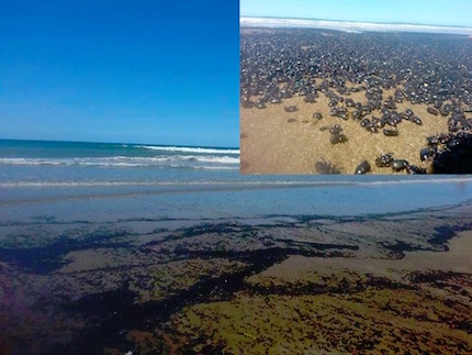 beetle-invasion-argentina-beach-2