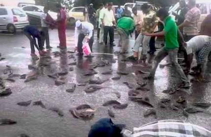 india-fish-rain