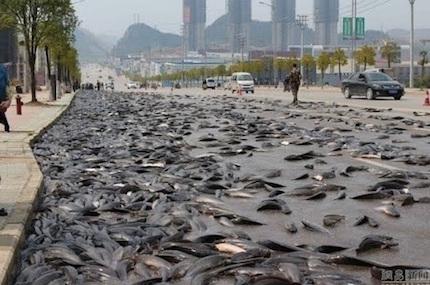 thai-fish-rain2