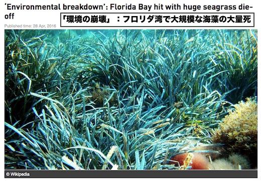 die-off-seaweed