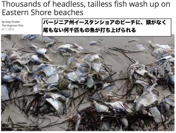 head-tail-less-fish-virginia