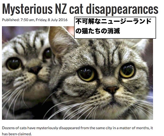 nz-cat-disappearances