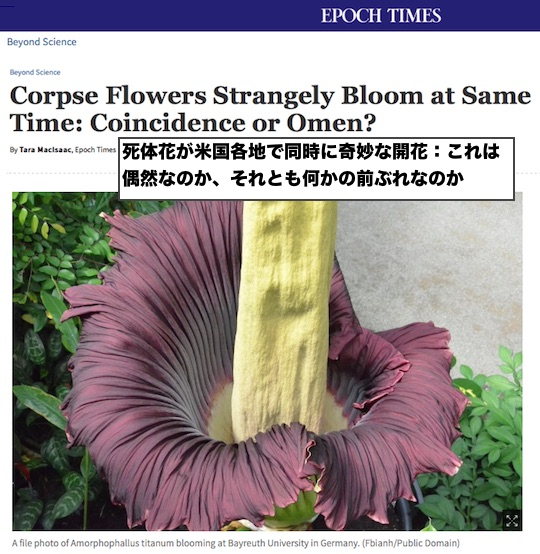 corpse-flower-america