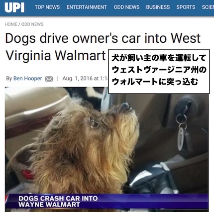 dog-crasher-wv
