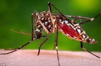 mosquitoes-2016b