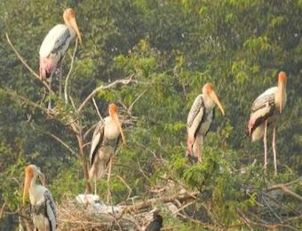 storks-india