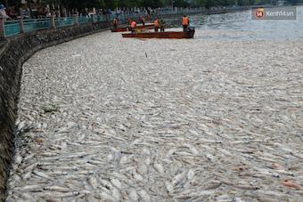 vietnam-fish-deaths