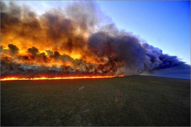偽りに満ちていたアマゾン大火災報道 : 今年のアマゾンの森林